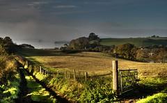 Into the Mist (suerowlands2013) Tags: churchtownfarmnaturereserve saltash cornwall riverlynher morningmist autumn cornwallwildlifetrust