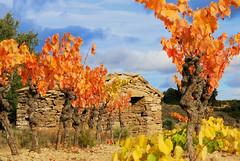 Vignes et cabane (GerardMarsol) Tags: france feuilles languedoc lumières cabanes vignes hérault automne aude ciel couleurs nuages minervois