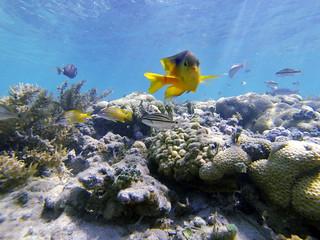 Tenho gostado cada vez mais de me dovertir fazendo snorkel. Sempre gostei, mas agora que posso fotografar, virou o hobby favorito! :) Foto de Coroa Vermelha acompanhando a pesquisa dos parceiros do IMD. ⠀ --- ENGLISH --- ⠀ I am enjoying more and more of s