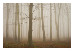 Friston Forest - December 21st (Edd Allen) Tags: forest trees tree treescape mist nikond610 nikon d610 70200mm landscape country countryside atmosphere atmospheric sunrise uk eastsussex woods woodland serene bucolic melancholy foliage leaves fristonforest fog sunlight frost winter