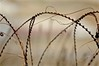 Concertina (cimarroncountryllc) Tags: concertina wall barrier wire barbed defense military background