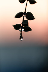 Diamond Drop (Azmarina Tanzir) Tags: macrounlimited droplet asia macromonday sunset nature