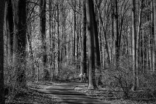 Wheaton Regional Park MD Tall Trees Older Couple In Monochrome