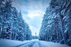 Värmlandsskogen Vinter ((Dalafotografen)) Tags: winter sweden värmland forest snow trees