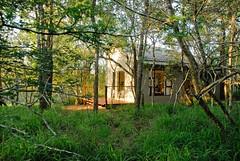 Umkhumbi room in forest light