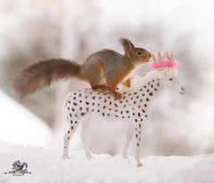 Red squirrel standing on an royal horse (Geert Weggen) Tags: animal christmas christmasdecoration coldtemperature gift event mammal nature ontopof outdoors photography rodent scenicsnature snow square squirrel standing sunlight sweden umbrella winter air balloon crown kingroyalperson royalty princeroyalperson gold princess coronation leadership empire luxury authority wealth majestic goldleaf shiny ceremony emperor carriage vehicle bispgården jämtland geert weggen ragunda