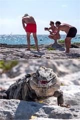 Mais qu est ce qu ils photographient ! (Hélène Baudart) Tags: dyptique iguane portraits mexique plage cancun