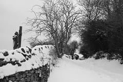 Faith Snow More (JamieHaugh) Tags: clevedon northsomerset england uk gb greatbritain outdoors sony a6000 snow blackandwhite blackwhite bw monochrome faith grave path white trees wall winter