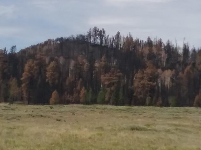 Duck Creek Fire 2