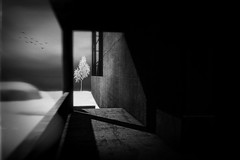 This Is the Place It Won't Hurt Ever Again (Gianmario Masala [inworld]) Tags: photoshop blur blurry mono monochrome landscape north gianmariomasala blackandwhite tree grain birds shadows snow sky seat highandlowkey window stairs wall architecture textured texture