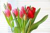 Fresh tulips (debbfay) Tags: tulips