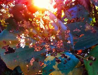 Leaf with back light