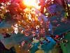 Leaf with back light (Die kleine Meerjungfrau) Tags: pink orange iphone iphone6 diekleinemeerjungfrau bright purple lila blau blue green red yellow rainbow regenbogen gelb grün rot gesprenkelt speckled alt old new neu lights light lichter licht sundown sunlight sun sonnenuntergang sonnenlicht sonne gegenlicht backlighting pflanzen pflanze plants plant nature natur colour farbe colours farben blätter blatt leafs leaf