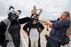 DSC02371 (Kory / Leo Nardo) Tags: fur furry fursuit fursuiting costume cosplay animal fursona space camp party alameda faction brewing 12118 pupleo thebayareafurries
