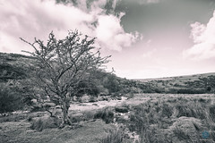 West Okement River - Meldon (pm69photography.uk) Tags: westokementriver dartmoor meldon meldonreservoir devon trees tree sony spooky sonya7rii sony1635mmgm sony1635mm sony1635mm28 grandmaster gm bw blackandwhite grunge river pm69photographyuk