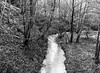 The Bend in the Burn (Stanley Burn) (Jonathan Carr) Tags: ancient woodland black white bw monochrome mediumformat rural northeast mamiya 6x45 burn stream
