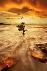 Mangroves on fire (Louise Denton) Tags: sunset orange yellow wetseason darwin nt mindilbeach mangrove mindil tree water ocean waves