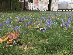 London (Melissa Osorio Photography) Tags: london uk europe travel melissaosorio melissa osorio nature scenery photo photography beautiful beauty flowers purple