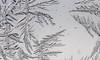 DSC_7822-2 (harynjk23) Tags: frostwork winter freez jégvirág tél macro nikon d5300 extension tubes