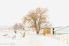 Down the Lane (Singing Like Cicadas) Tags: 2018 january winter farm countryside country amishcountry amish snow snowy fence mthope holmescounty corn onethousandgifts 1000gifts