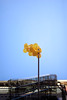Bond Street (joe holmes) Tags: nyc fireescape newyorkcity bondstreet balloons