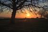 Monte Tuscolo (sga77) Tags: tramonto sunset tusculum tuscolo frascati roma rome italy rocca di papa monte compatri tree