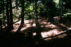 Brooklyn Botanical Garden (Xenograft) Tags: color slide film agfa precisa ct100 olympus omg zuiko new york city