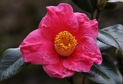 January Flower (Hugo von Schreck) Tags: hugovonschreck flower blume blüte macro makro canoneos5dsr tamron28300mmf3563divcpzda010 yourbestoftoday