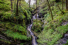 Gorge Walk (Half A Century Of Photography) Tags: gorge walk forest waterfall pentax pentaxkr pentaxdal scotland green water