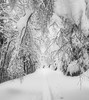 DreamWorld (evakongshavn) Tags: 7dwf landscape landschaft paysage winter winterwonderland snow natur nature hiver tree forest road wood winterlandscape naturphotography naturephotography bw bnwphoto bnw blancoynegro blacknwhite blackandwhite blackwhite biancoenero bianco nero
