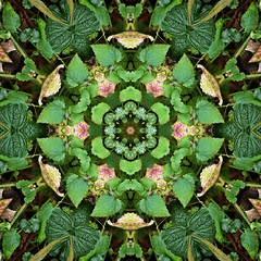 Kaleido Abstract 1756 (Lostash) Tags: life nature flora edited kaleidoscopes patterns shapes symmetry