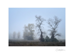 Trees in the mist #5 (Christos Andronis) Tags: air balance calm contemplation fog innerpeace leaning loneliness meadow meditation quietconceptual softlight tranquility woodlandstrees yellow γαλήνη ενατένιση μοναξιά μυστήριο ομίχλη