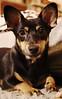 Milka (stempel*) Tags: pentax k30 polska poland polen polonia gambezia milka dog szczeniak pies puppy
