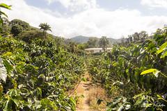 Hacienda Venecia, Colombia (ryananderton) Tags: colombia flowersplants landscape manizales coffee coffeefarm coffeeregion finca