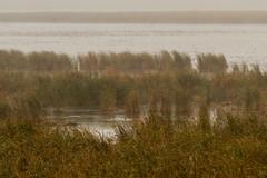 Dixon_JB_461_3971 (Joanne Bouknight) Tags: dixonwaterfowlrefuge illinois mist morning observationtower rain storm thewetlandsinstitute