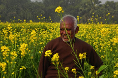 As you sow, so shall you reap! (Abeer!) Tags: portrait villager mustard field mustardfield chupi char chupichar purbasthali westbengal bengal india abeer abeerbarman flowers yellow green trees man