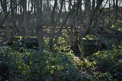 Bolton Wife Hill Colliery (davehell) Tags: coalmining colliery abandoned tottyhillwoods newmillerdam wakefield yorkshirecoalmining shaft headgear mineshaft overgrown
