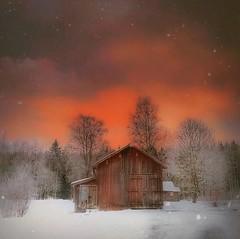 ~ burning sky ~ Riddarhyttan, Sweden (Tankartartid) Tags: picsart orange brinnandehimmel clouds moln himmel sky burningsky träd trees landsbygd pålandet countryside barn lada ladugård snö snow vinter winter norden nordic västmanland riddarhyttan europe sverige sweden instagram