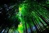 Green II (kazs2307) Tags: green bamboo garden 緑 竹 竹林 庭 ガーデン moa美術館