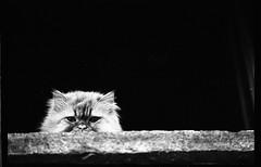 ReServe (3NT8) Tags: biancoenero bn bw blackandwhite ilford tree albero città city street holga lomo pietro clarizia 3nt8 noiretblanc nb filmphotography filmisnotdead film analogue analogphotography analogico analog 35mm nikkormat cat gatto
