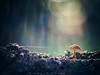 Tirolina (www.studio360fotografia.es) Tags: leitzcolorplan90mm25 setas valdeinfierno olympus omd em10 bokeh desenfoque proyector projector colors colores mushroom fungi nature naturaleza fatasy fantasia tirolina