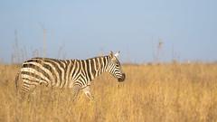 Nairobi-Nationalpark-0514 (ovg2012) Tags: kenia kenya nairobi nairobinationalpark
