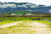 Ellis Creek (opheliosnaps) Tags: vineyard petaluma california usa sonoma county green trail dof eye level lines outdoors