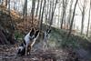 New logging trails