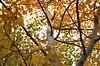 Tree Trunk in Autumn (pokoroto) Tags: tree trunk autumn calgary カルガリー アルバータ州 alberta canada カナダ 10月 十月 神無月 かんなづき kannazuki themonthwhentherearenogods 平成29年 2017 october