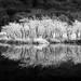 Reflections (Rocco Fanello) Tags: passeggiatafotografica valganna landscape inverno landscapeshunters riflessi alberi lago