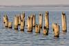 Here (Keith Midson) Tags: bridport tasmania oldpier pier water posts sea coast coastline australia