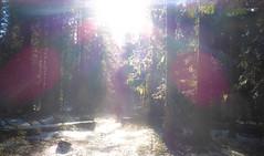 Margo and Sophie Hiking (ex_magician) Tags: trail forest highlakestrail klamathfalls oregon moik photo photos picture pictures image interesting lightroom adobe adobelightroom lakeofthewoods fishlake hiking sophie margosdog siberianhusky shepherd cross margo wife