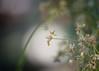 a moment in the spotlight (Emma Varley) Tags: plant glasshouse spotlight sunlight ray bokeh dreamy soft indoor garden greenhouse