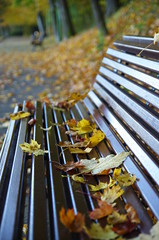 Take a seat (Baubec Izzet) Tags: baubecizzet pentax leaves autumn bench park flickrunitedaward